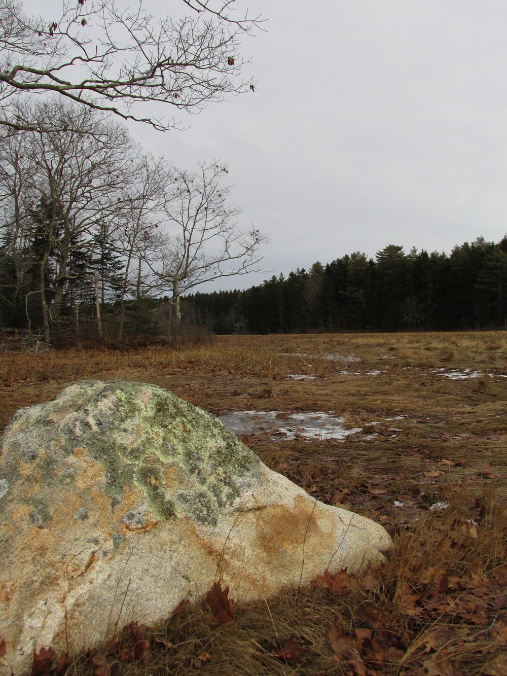 The marsh at Hook Rock Preserve