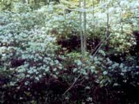 Photograph of Bijhouwer Forest Easement