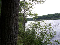 Photo of Center Pond Preserve